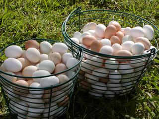 egg basket חטא ג: אחחחח.... הביצים, הביצים....